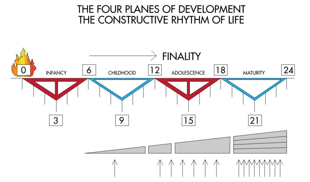 illustrasjon av de fire utviklingstrinnene i montessoripedagogikken